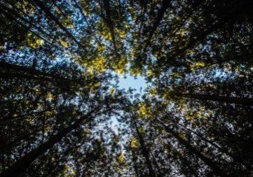 Imagen de bosque